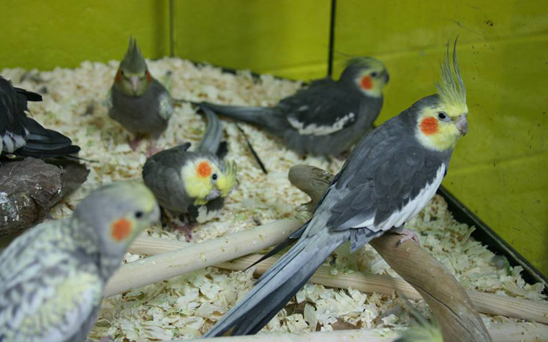 slide bird