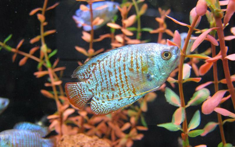 slide fish
