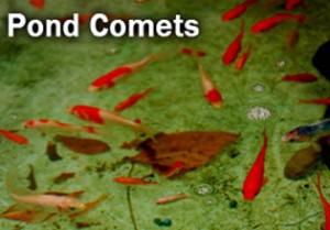 pond comets