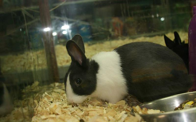 slide bunny
