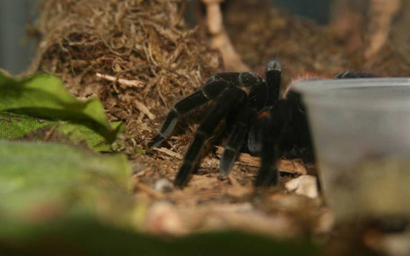 slide spider