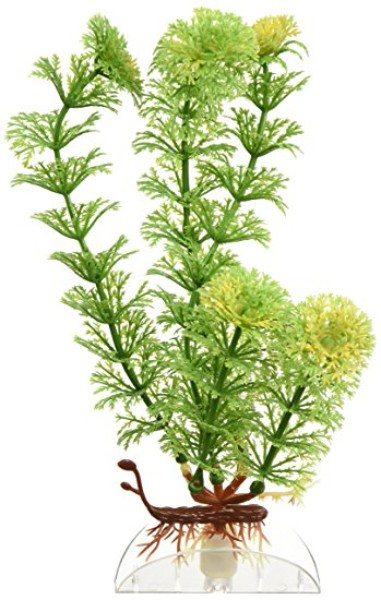 Green Ambulia